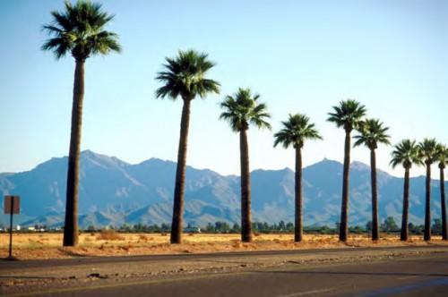 palmtrees3_500_332